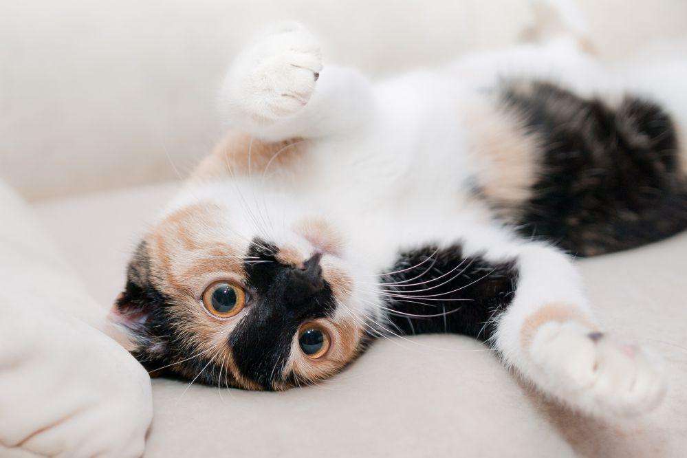 Não sabe como cuidar de um gato filhote? Confira 6 dicas