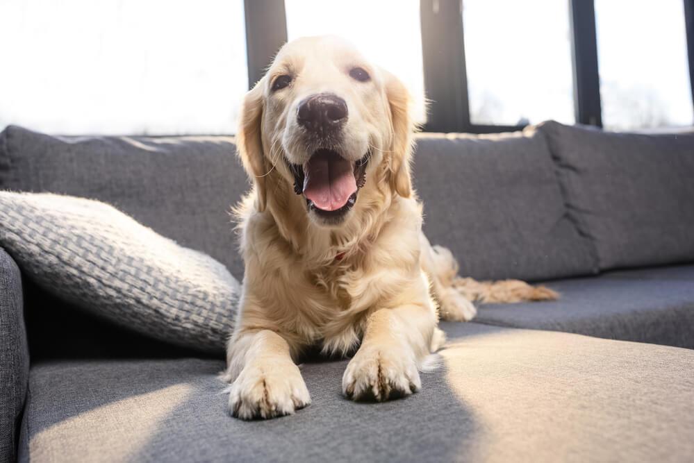 Veja agora 6 dicas para deixar o seu cachorro sozinho em casa