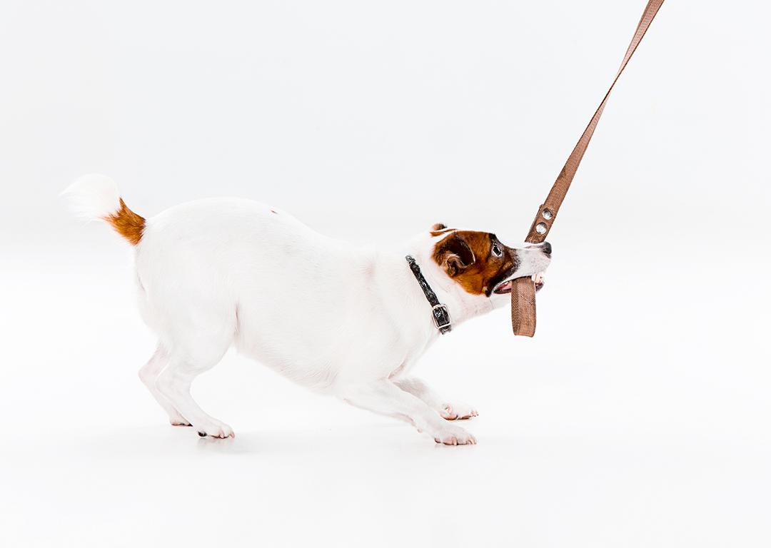 Terapia com animais de estimação – Ajudam pessoas e transformam vidas