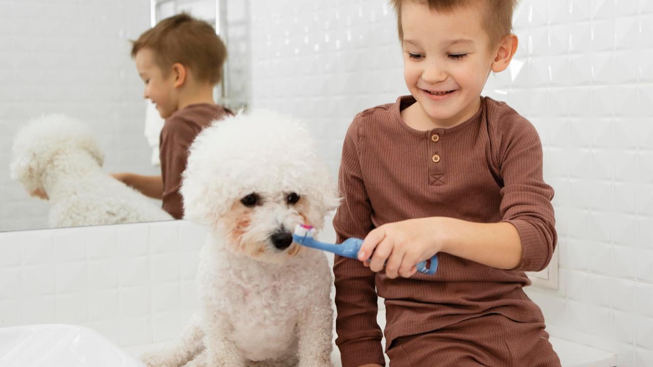 Se Liga!  A falta de escovação dos dentes de cães e gatos pode ocasionar processo inflamatório e o desenvolvimento de problemas renais, hepáticos, cardíacos além de complicações nas articulações.