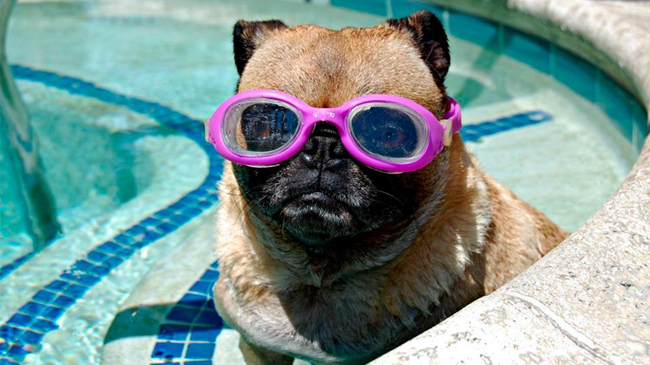 Atividades na água podem ser uma boa alternativa para os animais de estimação se divertirem no verão
